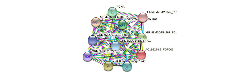 AC196278.2_FGP003 protein (Zea mays) - STRING interaction network