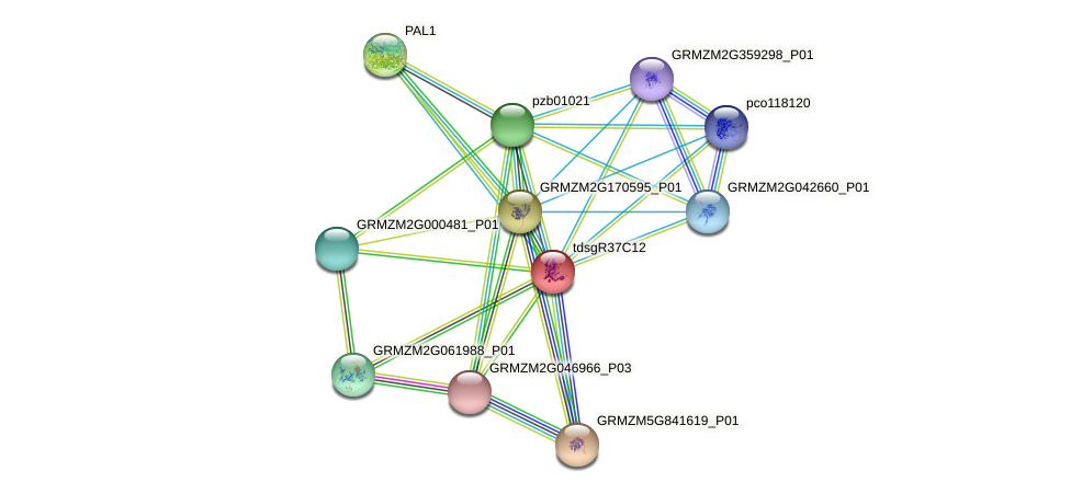 AC196412.3_FGP001 protein (Zea mays) - STRING interaction network