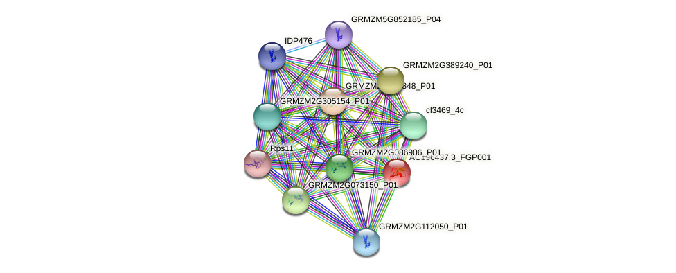 AC196437.3_FGP001 protein (Zea mays) - STRING interaction network