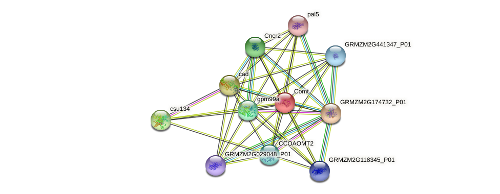 comt protein (Zea mays) - STRING interaction network