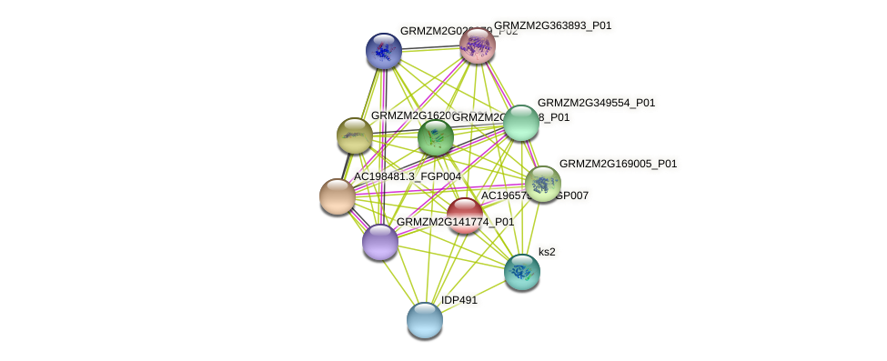 AC196575.3_FGP007 protein (Zea mays) - STRING interaction network