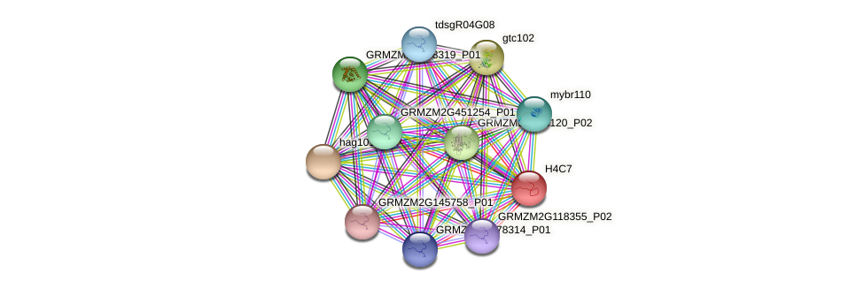 AC196961.2_FGP003 protein (Zea mays) - STRING interaction network