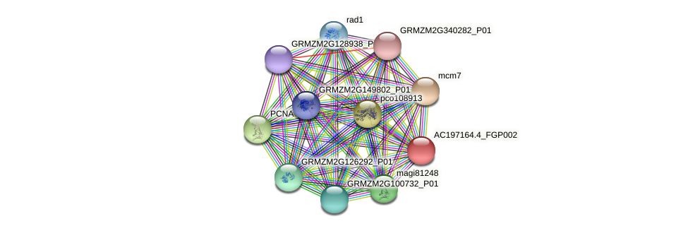 AC197164.4_FGP002 protein (Zea mays) - STRING interaction network