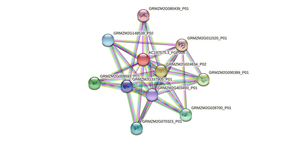 AC197575.3_FGP008 protein (Zea mays) - STRING interaction network