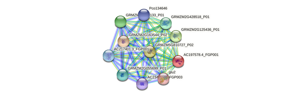 AC197578.4_FGP001 protein (Zea mays) - STRING interaction network
