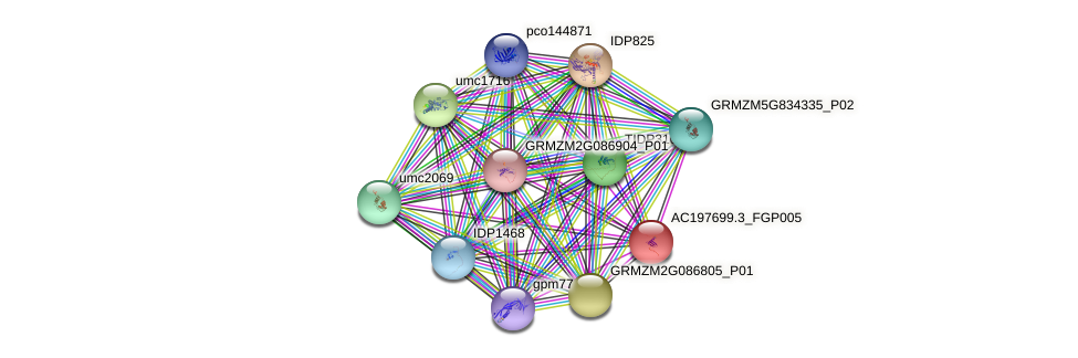 AC197699.3_FGP005 protein (Zea mays) - STRING interaction network