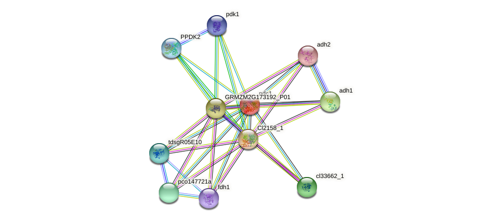PDC1 protein (Zea mays) - STRING interaction network