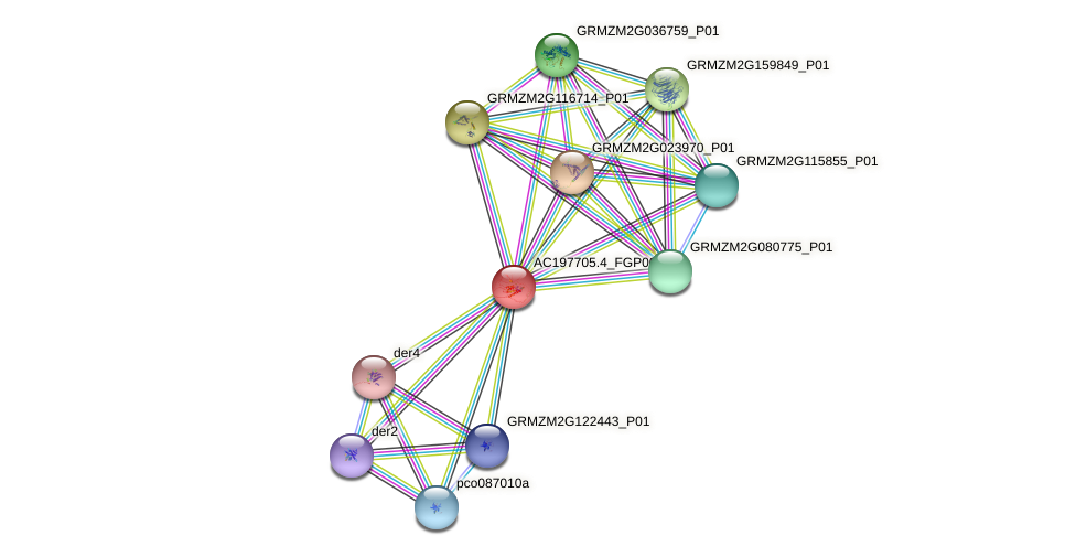 AC197705.4_FGP006 protein (Zea mays) - STRING interaction network