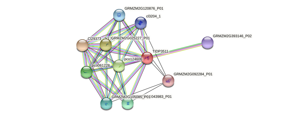 TIDP3511 protein (Zea mays) - STRING interaction network