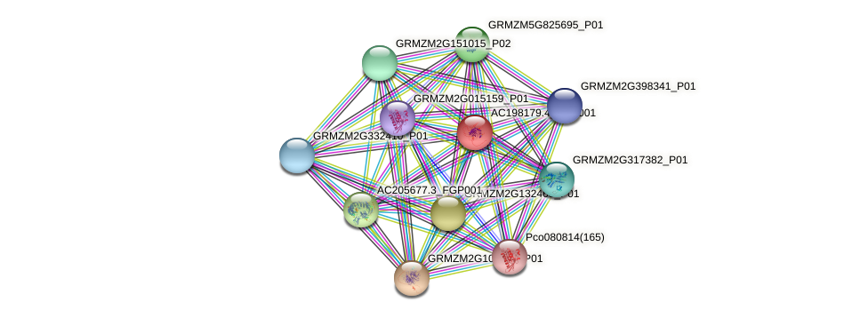AC198179.4_FGP001 protein (Zea mays) - STRING interaction network