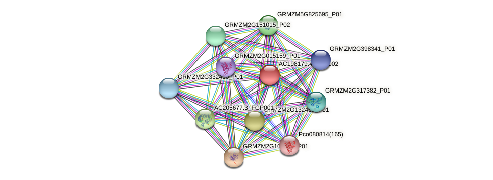 AC198179.4_FGP002 protein (Zea mays) - STRING interaction network