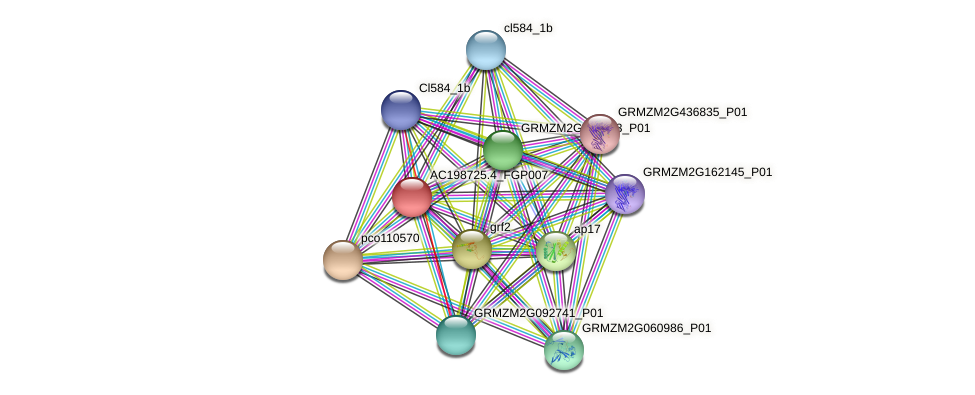 AC198725.4_FGP007 protein (Zea mays) - STRING interaction network