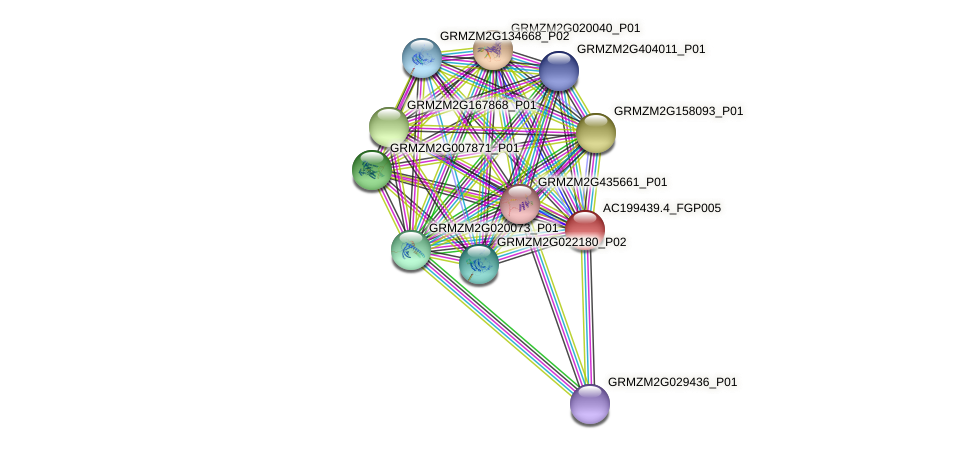 AC199439.4_FGP005 protein (Zea mays) - STRING interaction network