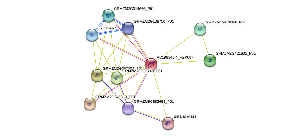 AC199541.4_FGP007 protein (Zea mays) - STRING interaction network
