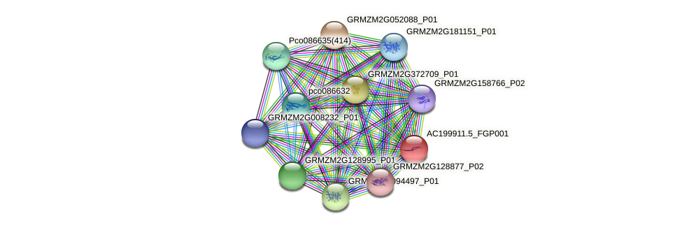 AC199911.5_FGP001 protein (Zea mays) - STRING interaction network
