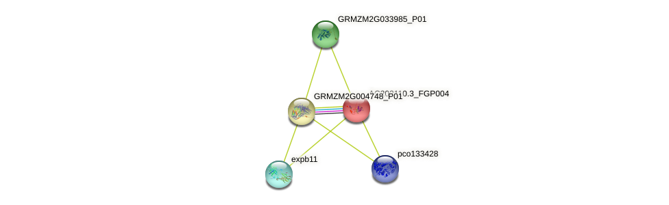 AC202110.3_FGP004 protein (Zea mays) - STRING interaction network