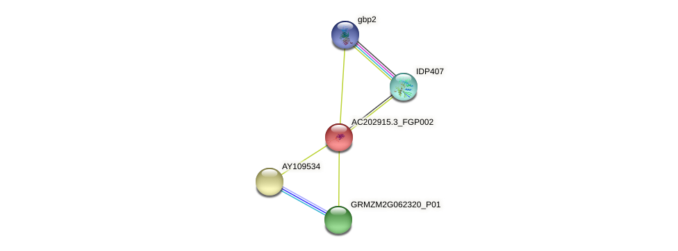 AC202915.3_FGP002 protein (Zea mays) - STRING interaction network