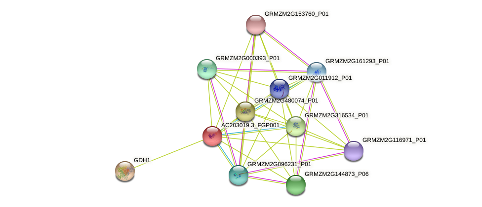 AC203019.3_FGP001 protein (Zea mays) - STRING interaction network