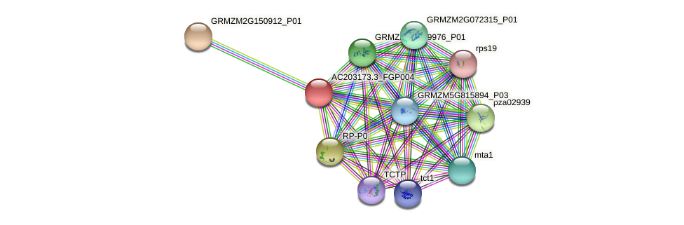 AC203173.3_FGP004 protein (Zea mays) - STRING interaction network