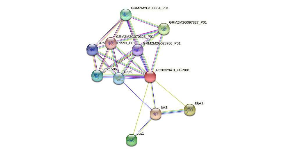 AC203294.3_FGP001 protein (Zea mays) - STRING interaction network