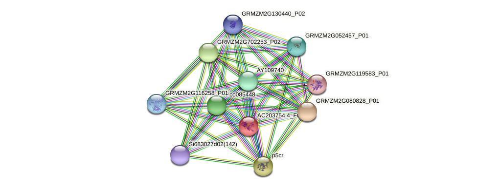 AC203754.4_FGP008 protein (Zea mays) - STRING interaction network
