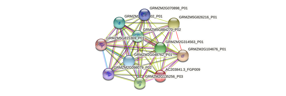 AC203841.3_FGP009 protein (Zea mays) - STRING interaction network