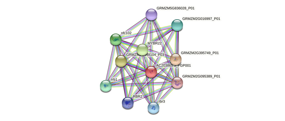 cpp13 protein (Zea mays) - STRING interaction network