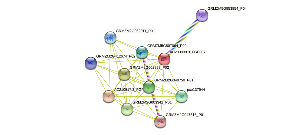 AC203909.3_FGP007 protein (Zea mays) - STRING interaction network
