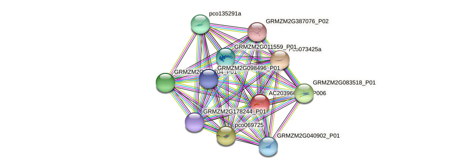 AC203966.5_FGP006 protein (Zea mays) - STRING interaction network