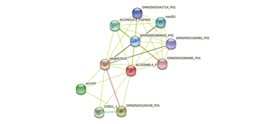 103640631 protein (Zea mays) - STRING interaction network