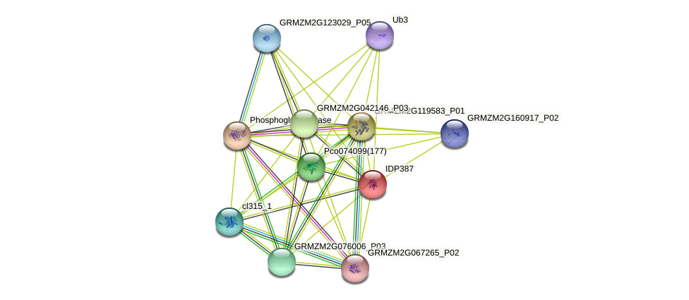 IDP387 protein (Zea mays) - STRING interaction network