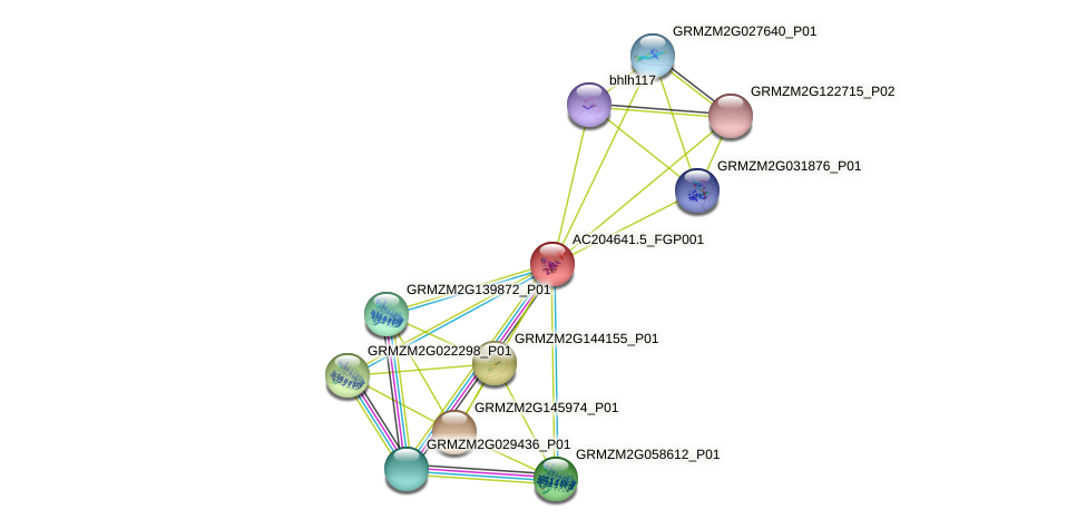AC204641.5_FGP001 protein (Zea mays) - STRING interaction network