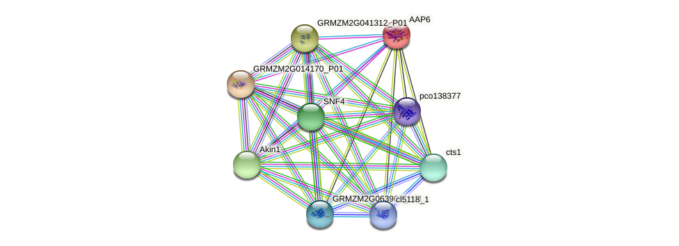 Zm.83777 protein (Zea mays) - STRING interaction network