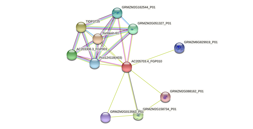 AC205703.4_FGP010 protein (Zea mays) - STRING interaction network