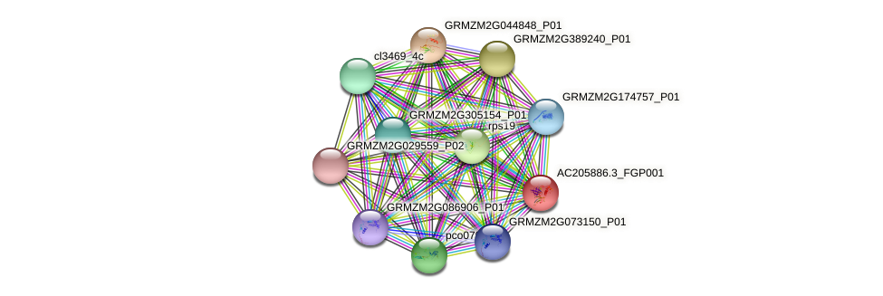 AC205886.3_FGP001 protein (Zea mays) - STRING interaction network