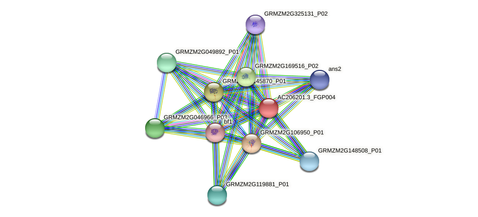 AC206201.3_FGP004 protein (Zea mays) - STRING interaction network