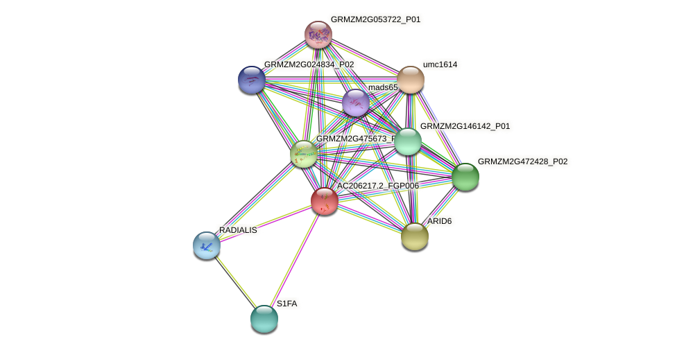 103631557 protein (Zea mays) - STRING interaction network