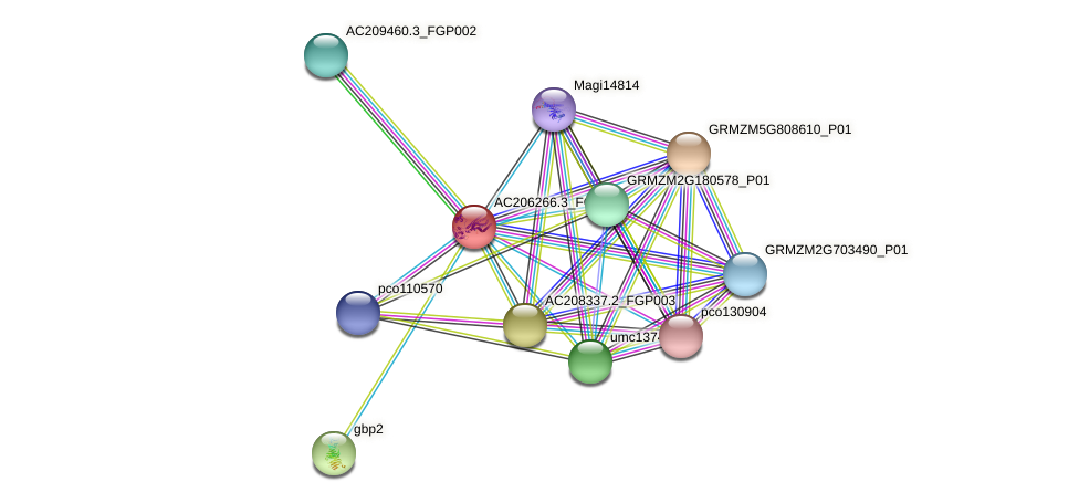 AC206266.3_FGP001 protein (Zea mays) - STRING interaction network