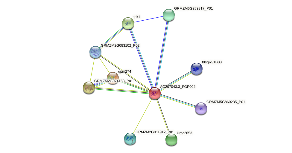 AC207043.3_FGP004 protein (Zea mays) - STRING interaction network