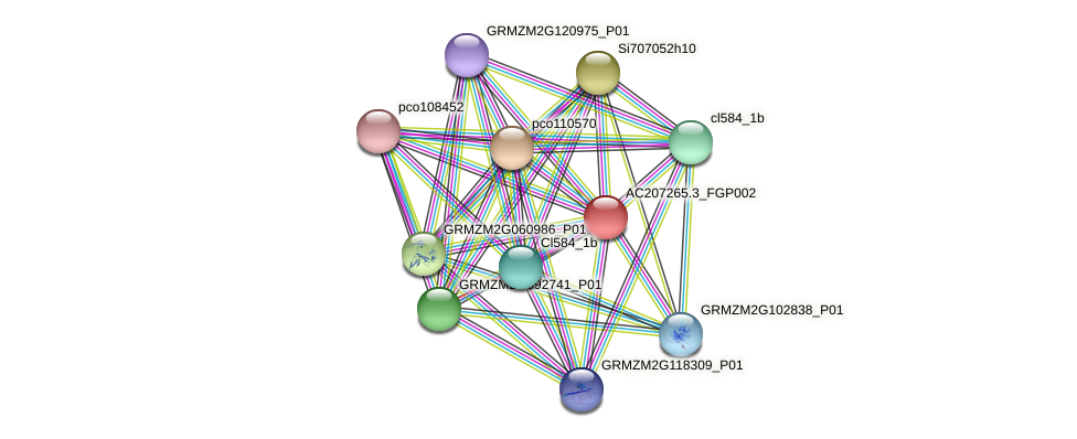 AC207265.3_FGP002 protein (Zea mays) - STRING interaction network