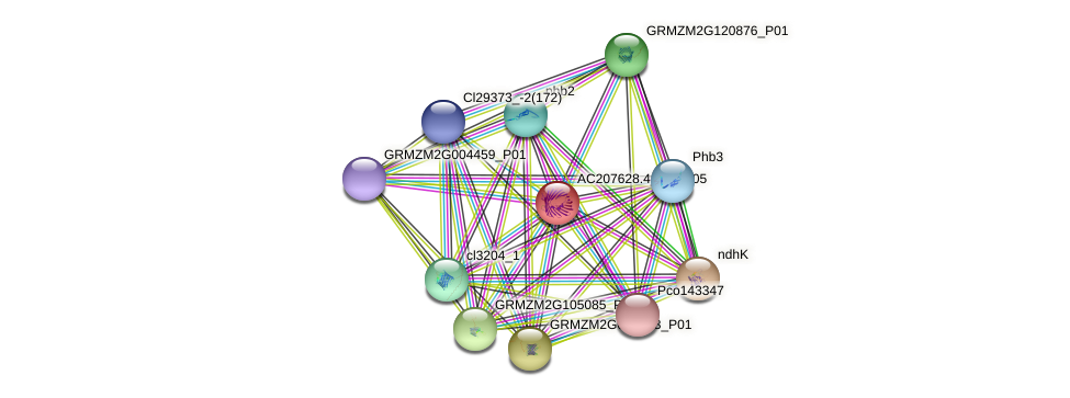 AC207628.4_FGP005 protein (Zea mays) - STRING interaction network