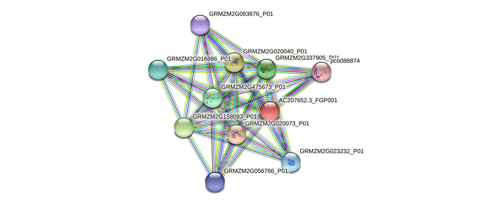 AC207652.3_FGP001 protein (Zea mays) - STRING interaction network