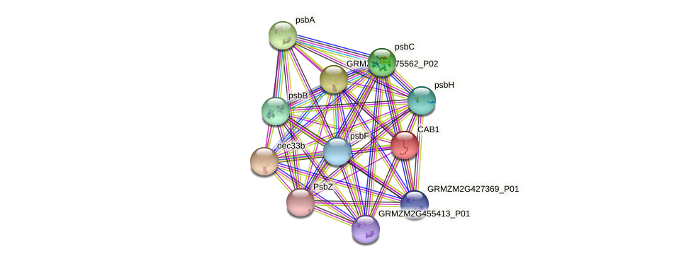 CAB1 protein (Zea mays) - STRING interaction network