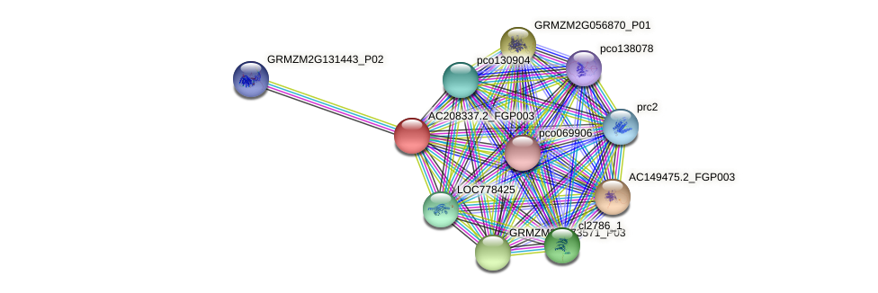 AC208337.2_FGP003 protein (Zea mays) - STRING interaction network