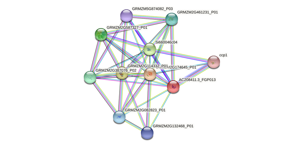 AC208411.3_FGP013 protein (Zea mays) - STRING interaction network