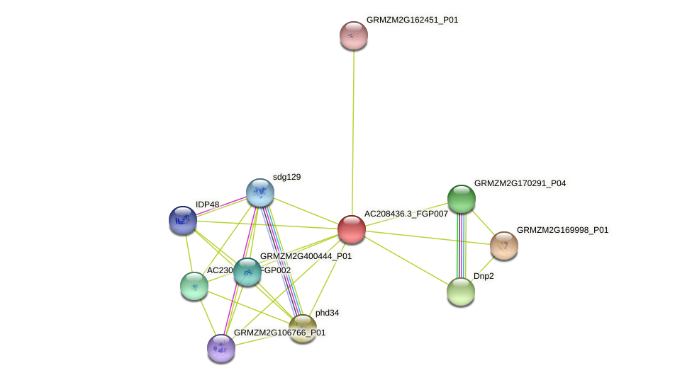 AC208436.3_FGP007 protein (Zea mays) - STRING interaction network