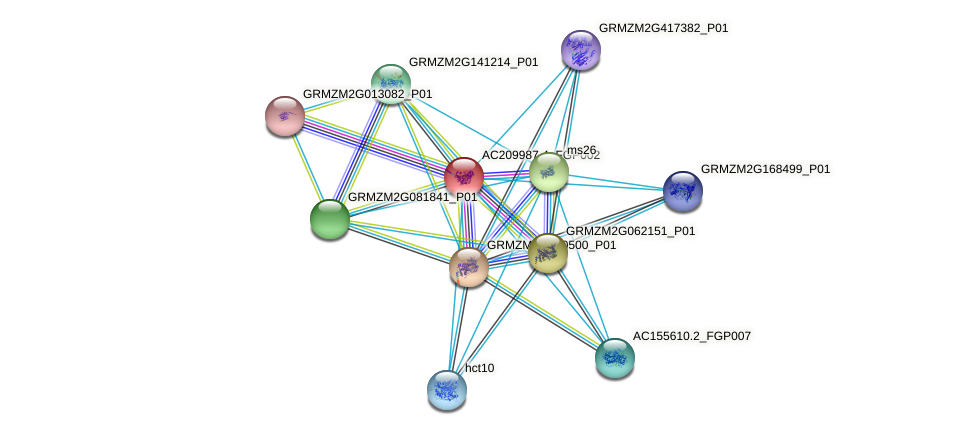 AC209987.4_FGP002 protein (Zea mays) - STRING interaction network
