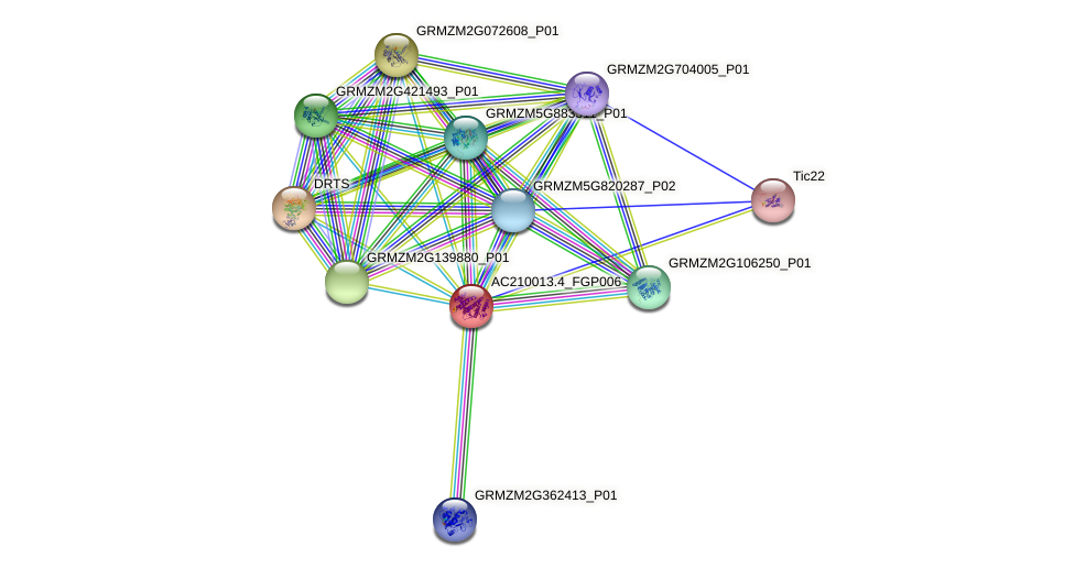AC210013.4_FGP006 protein (Zea mays) - STRING interaction network