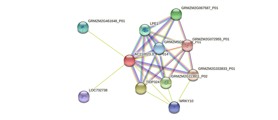AC210023.3_FGP014 protein (Zea mays) - STRING interaction network
