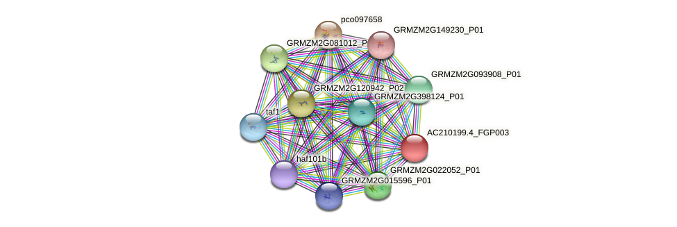 AC210199.4_FGP003 protein (Zea mays) - STRING interaction network